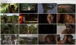 Ludzie Osy / Amyu, l'arm?e des Hommes guepes (2010) PLSUB.TVRip.XviD / PLSUB
