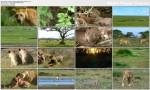Królowe zwierz±t / Lion Queen (2009) PL.1080i.HDTV.x264 / Lektor PL