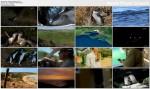 Wyspa pingwinów / Penguin Island (2010) PL.TVRip.XviD / Lektor PL