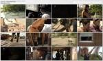 The Colony - misja przetrwanie / The Colony (Season 2) (2010) PL.TVRip.XviD / Lektor PL