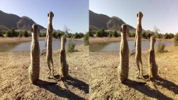 Kalahari Meerkats (2012) 1080p.BluRay.3D.H-SBS.DTS.x264-Public3D