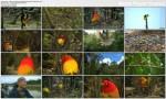 Tajemnice Zwierz±t / Wildlife (2010) PL.HDTV.1080i / Lektor PL