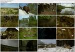 Czarnobyl ¿ycie w strefie ¶mierci / Chernobyl Life in the Dead Zone (2007)  PL.DVBRip.XviD / Lektor PL