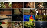 Cuda ¿ycia / Wonders of Life (Season 1) (2012) PL.DVBRip.XviD / Lektor PL