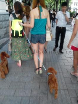遛狗的美女和牛仔短裤美女
