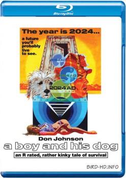 A Boy and His Dog 1975 m720p BluRay x264-BiRD