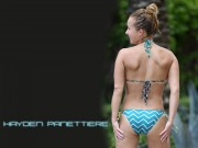 Hayden Panettiere : Bikini Wallpapers x 5